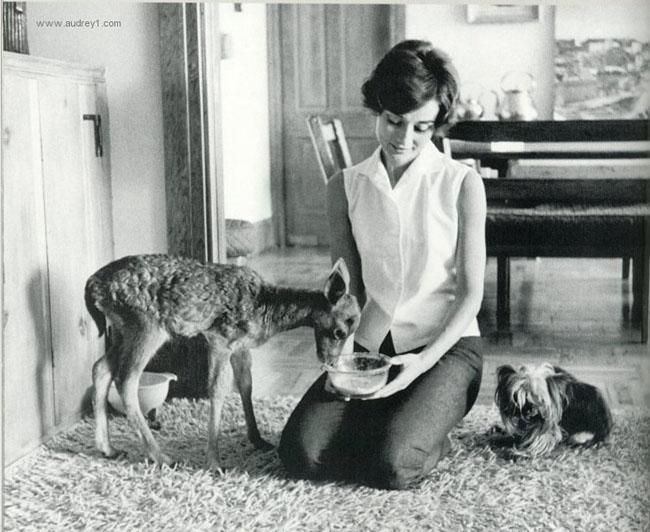 Audrey Hepburn (19)