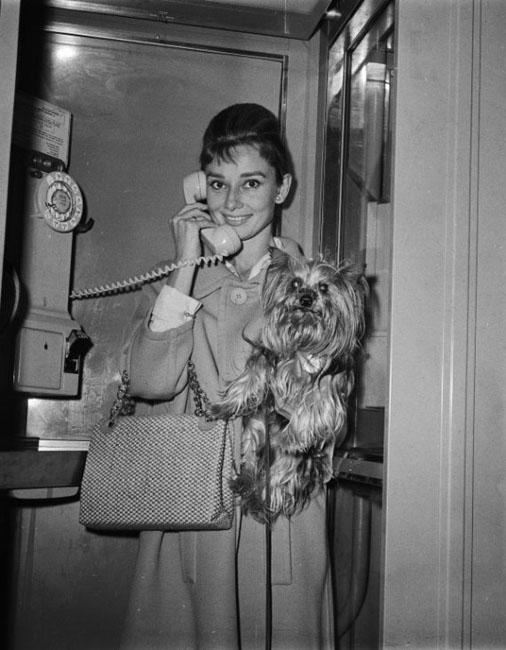 Audrey Hepburn (36)