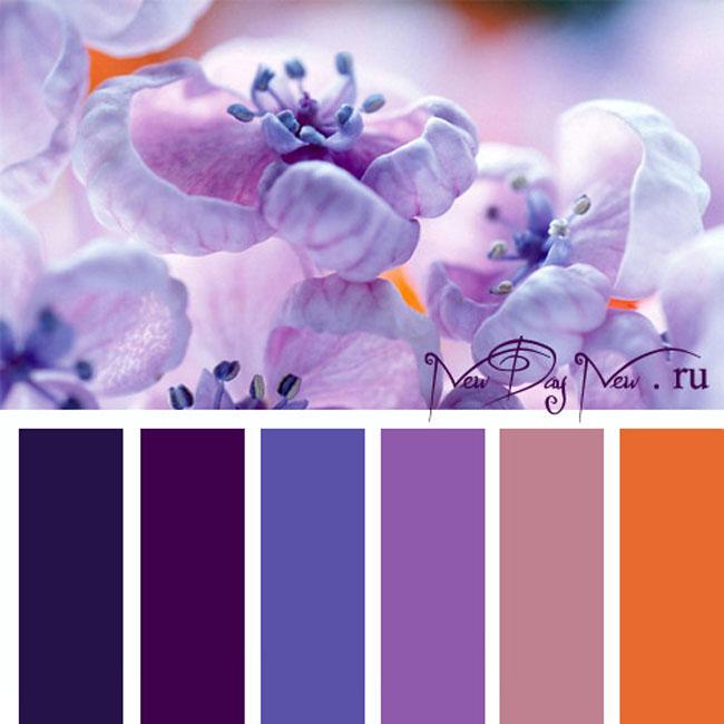 Фиолетовый сочетания цветов